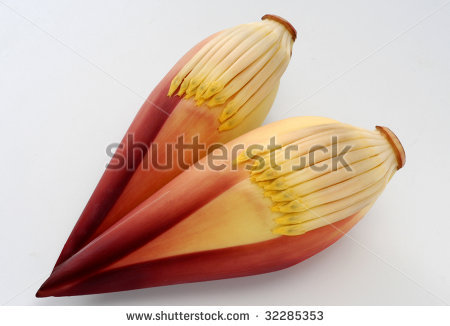 stock photo : Two Banana Flower on White Background